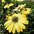Flowers (161835279).jpeg
