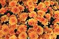 Flowers 3 (149945677).jpeg
