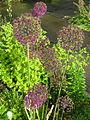 Flowers in SE Portland, Oregon in 2012 - 04.JPG