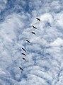 Fly past (8032837585).jpg