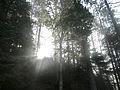 Fog - Algonquin Provincial Park, Ontario 02.jpg