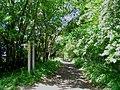 Footpaths through White's Wood - geograph.org.uk - 177963.jpg