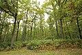 Forêt Départementale de Méridon à Chevreuse le 29 septembre 2017 - 49.jpg