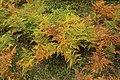 Forêt Départementale de Méridon à Chevreuse le 29 septembre 2017 - 54.jpg