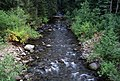 Forest and Stream, Rogue River-Siskiyou National Forest (36969023071).jpg