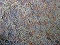 Fossiliferous sandstone (Byer Sandstone, Lower Mississippian; Dugway Outcrop, Newark, Ohio, USA) 4 (32767600445).jpg