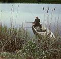 Fotothek df ld 0003070 001a Landschaften ^ Flußlandschaften ^ Angler.jpg