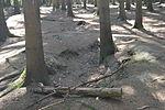 Foxholes - Bois Jacques - Bastogne - 06.jpg