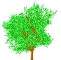 Fractal tree.png