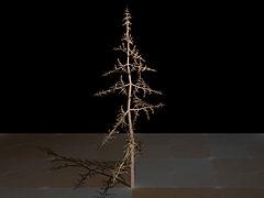 Fractal tree (Plate b - 1).jpg
