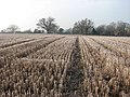 Frozen stubble - geograph.org.uk - 1114149.jpg