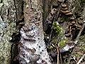 Fungi Hard at Work - panoramio.jpg