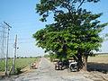 FvfPangasinanTarlac9480 26.JPG