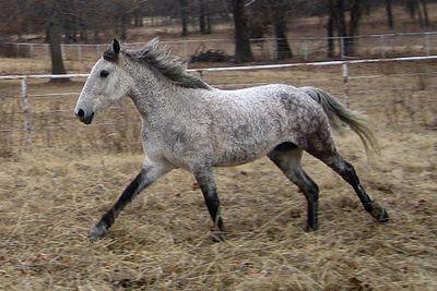 kleinste pferderasse