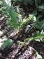 Gardenology.org-IMG 0814 rbgs10dec.jpg