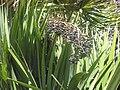 Gardenology.org-IMG 2115 hunt0903.jpg