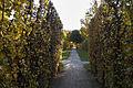 Gardens in Schönbrunn (10).jpg
