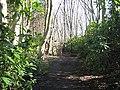 Gate, Links Wood - geograph.org.uk - 1226109.jpg