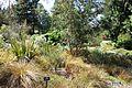 General view - VanDusen Botanical Garden - Vancouver, BC - DSC07392.jpg