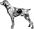 German Short Haired Pointer (PSF).png