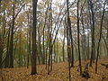 Gfp-minnesota-great-river-bluffs-state-park-forest-wit-mist.jpg