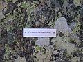 Giardino Botanico Alpino Paradisia abc26.JPG
