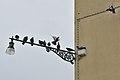 Giudecca Rio di Sant Eufemia piccioni Venezia.jpg