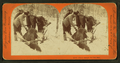 Glory enough for one day, from Robert N. Dennis collection of stereoscopic views 4.png