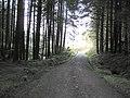 Gortin Glen Forest Park - geograph.org.uk - 116805.jpg