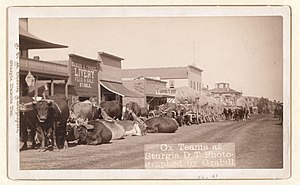 Sturgis, South Dakota - Ox teams at Sturgis, taken between 1887 and 1892