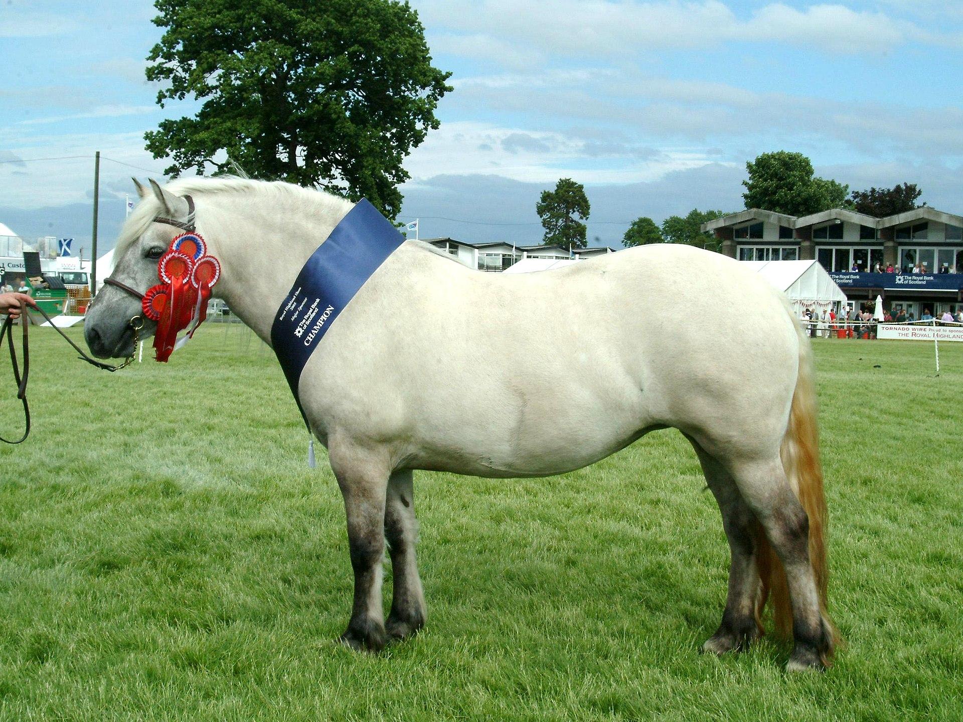 Highland Pony - Horse Scanner