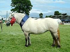 Costume poneys 4
