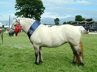 A Highland Pony, demonstrating the pony characteristics of sturdy bone, a thick mane and tail, a small head, and small overall size. Gracie-rhs2005.jpg