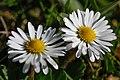 Gradina Botanica (8703519078).jpg