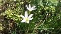 Grass flowers 1.jpg