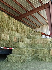 When possible, hay, especially small square bales like these, should be stored under cover and protected from the elements.