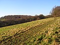 Grassland below Bellingdon - geograph.org.uk - 1081214.jpg