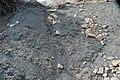 Gray shale & bentonites (Benton Shale, Upper Cretaceous; Red Rock Canyon Open Space, Colorado Springs, Colorado, USA) 8.jpg