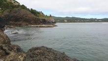 File:Gray whale feeding at Yaquina Head.webm