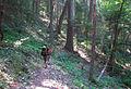 Grayback Mountain (15824457682).jpg