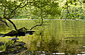 Green Glendalough (2698511021).jpg