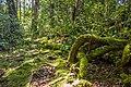 Gunung berembun mossy forest.jpg