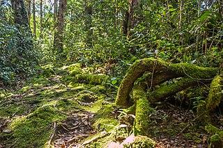 Peninsular Malaysian montane rain forests terrestrial ecoregion in the Malay Peninsula