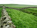 Hadrian's Wall and ditch east of Aesica - geograph.org.uk - 451119.jpg
