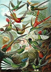 Ilustração presente no livro Kunstformen der Natur