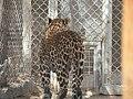 Hai Bar Yotvata Nature Reserve 24.jpg