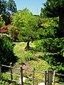 Hakone Gardens, Saratoga, CA - IMG 9158.JPG