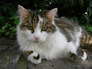 Hoch steht katze fell Katze stellt