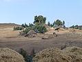 Hauts plateaux d'Ethiopie-Région Amhara (10).jpg