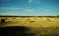 Hay-bales-tellico-plains-tn1.jpg